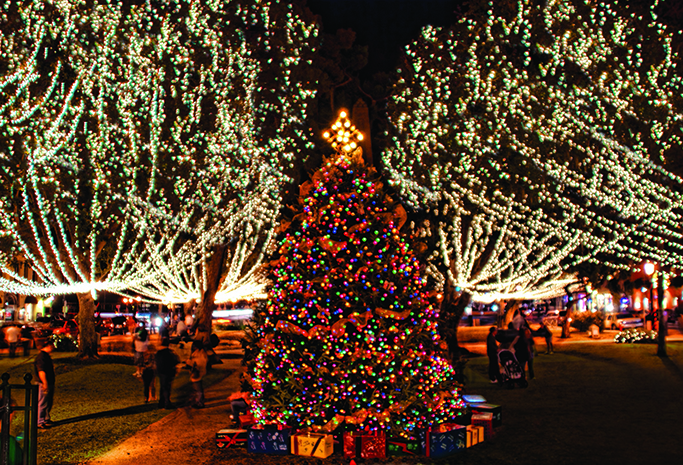 Christmas Tree in the Plaza
